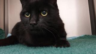 Missing black cat has Halloween reunion with owner after six years