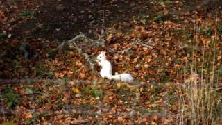 Rare white squirrel photographed in Royal Deeside