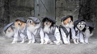 The Shetland dog models whose photoshoots can stop traffic