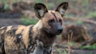 Storm Ciara: Wild dogs kill animals after escaping enclosure
