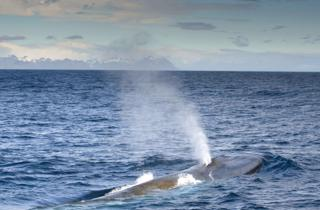 'Astonishing' blue whale numbers at South Georgia