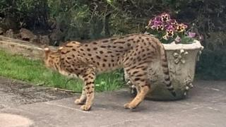 East Finchley big cat scare: Armed police called to garden