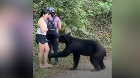 Mexico bear that sniffed woman